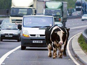 Будут ли штрафовать водителей, едущих по трассе со скоростью ниже разрешенной
